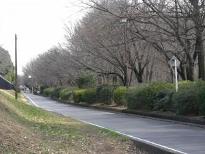 武蔵野桜橋マンション 玉川上水沿道