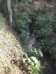 武蔵野桜橋マンション 玉川上水