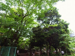 カテリーナ新宿蔵王 「新宿公園」